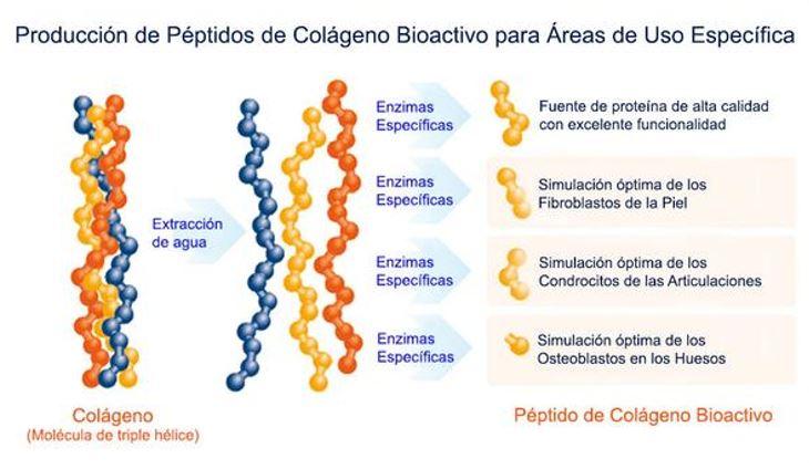 Antiage – Colágeno hidrolizado tipo I, II, III | BioMolecular Center
